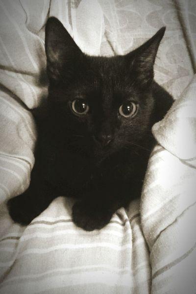 Aizen Myblackcat Blackandwhite