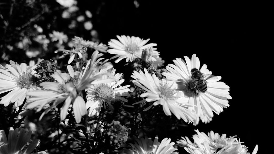 Nature Nature Photography Fleur Fleurs Insect Insects  Insect Photography