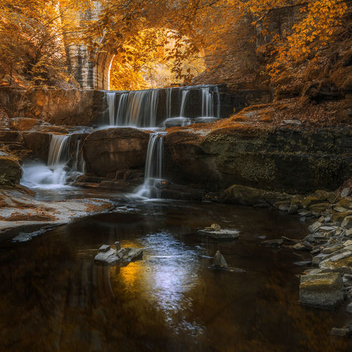 Beautiful view of flowing water in forest