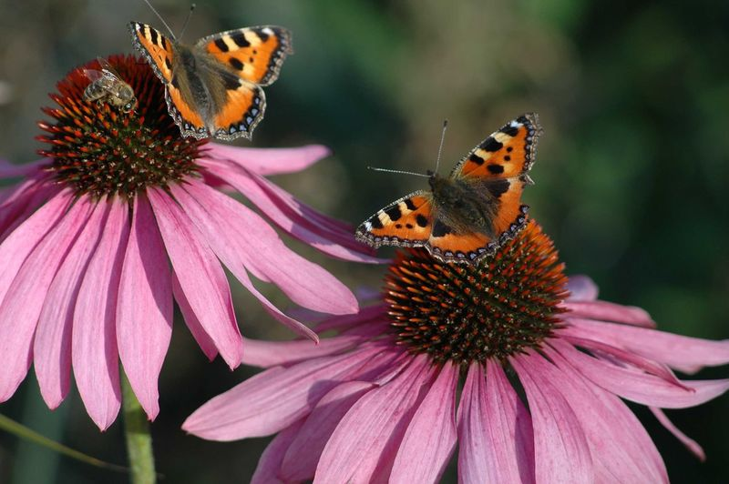 Close-up of butterflies on flowers