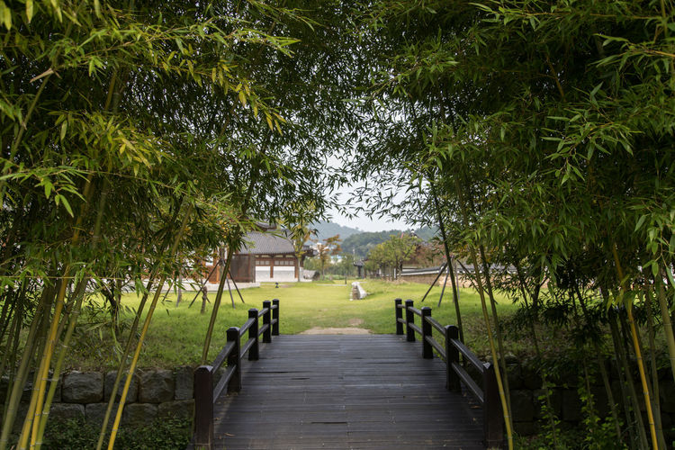 Juknokwon, the famous bamboo park in Damyang, Jeonnam, South Korea Damyang Juknokwon Bamboo Beauty In Nature Built Structure Day Grass Growth Nature No People Outdoors Scenics Sky The Way Forward Tranquility Tree Water
