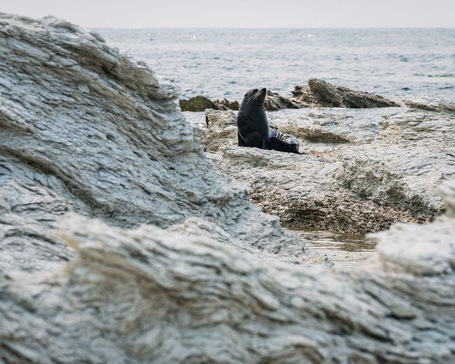 View of fur seal on rocks on beach