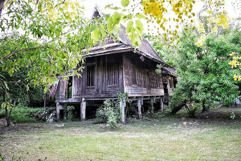 Built Structure Day Outdoors Architecture No People Tree Building Exterior Nature Travel Thailand Tree Nature EyeEm Team Bangkok Thailand. EyeEm Thailand Photos Ko Kret Kokret Kohkret EyeEm Gallery