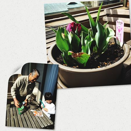 Generations EyeEm Nature Lover Beauty In Everything Quality Time Tulips Family Matters Looking Into The Future Planting