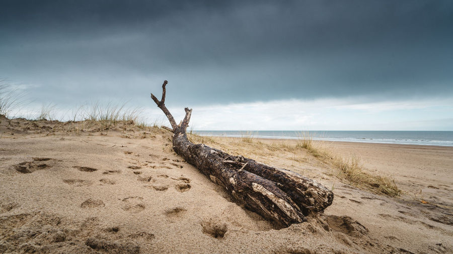 Driftwood on