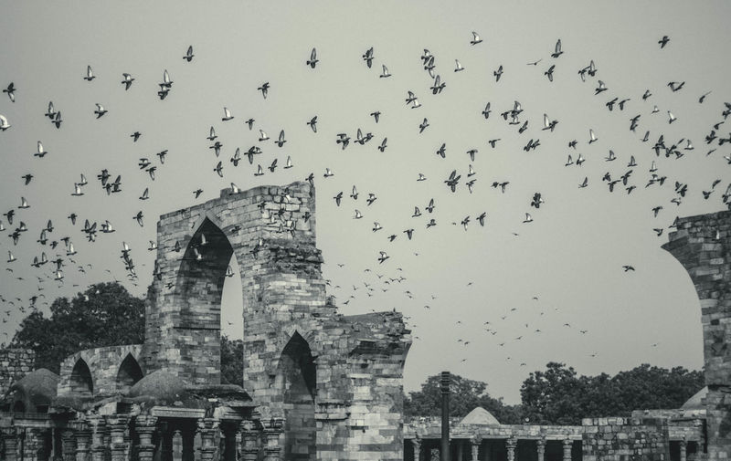 Animal Themes Animals In The Wild Architecture Bird Building Exterior Built Structure Cultures Day Flock Of Birds Flying Horizontal Large Group Of Animals Migrating Nature No People Outdoors Sky