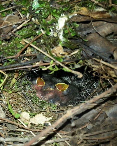 Feed Me Hungry Wren Chicks Nesting