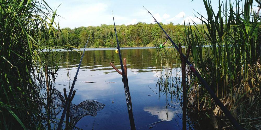 Fishing Nature