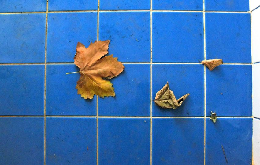 With The Door Wide Open Autumn Bathroom Art Beauty In Nature Blue Blueandwhite Change Contrasting Textures Contrastingcolors Day Doorwideopen Dry Fall Colors Indoorshoot Leaf Natural Condition Nature Scenics Season  Soiled Tiled Floor Tilesart Topview Tranquil Scene Tranquility