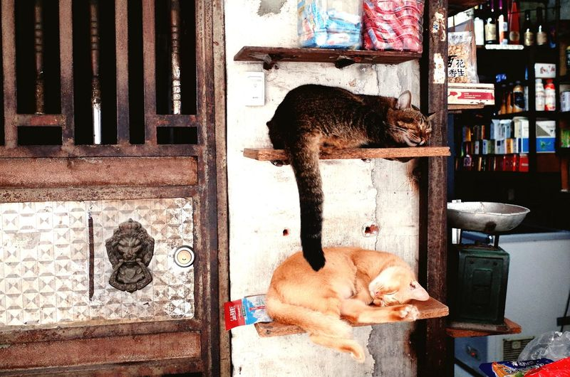 Sleeping Dog And Cat