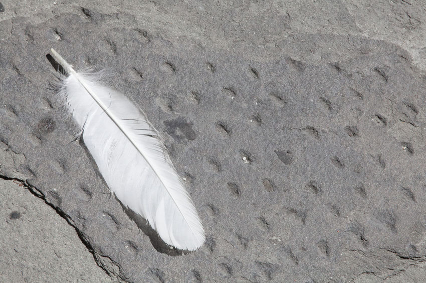 A feather on the ground Light Backgrounds Birds Close-up Concrete Day Feather  Fragility Lightweight Nature No People Outdoors Plume Stone White