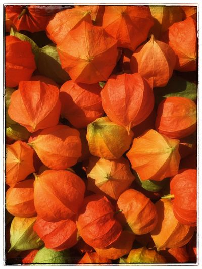 Flowers Colors Full Frame Fruit Transfer Print Backgrounds Food Healthy Eating Food And Drink