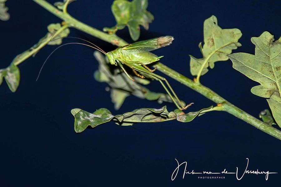 Grasshopper hops on in the darkness. Insect Close-up Nature Black Background Animal Themes EyeEm Nature Lover