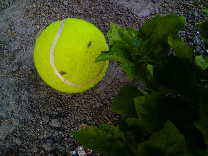Tennis Ball Tennis 🎾 Sports Photography Sports Ball On The Ground Greenery From My Point Of View Tennis <3 Tennis Balls Tennisball Tennis Tennislover❤ Tennisballs Tennis Game Different Perspective EyeEm Gallery Showcase June