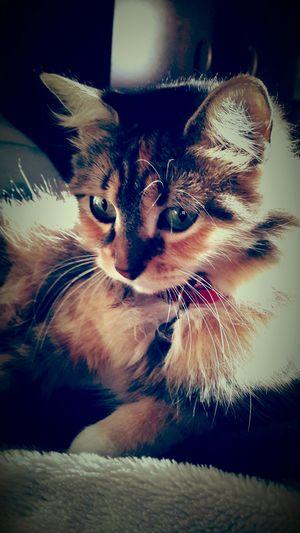 Cat♡ Gata ♡ Princess Kitypatitassuavessuavestienessuspatitas