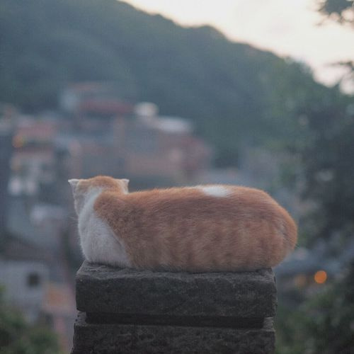Chillax cat enjoying the sunset Streetphotography Landscape Cat Life
