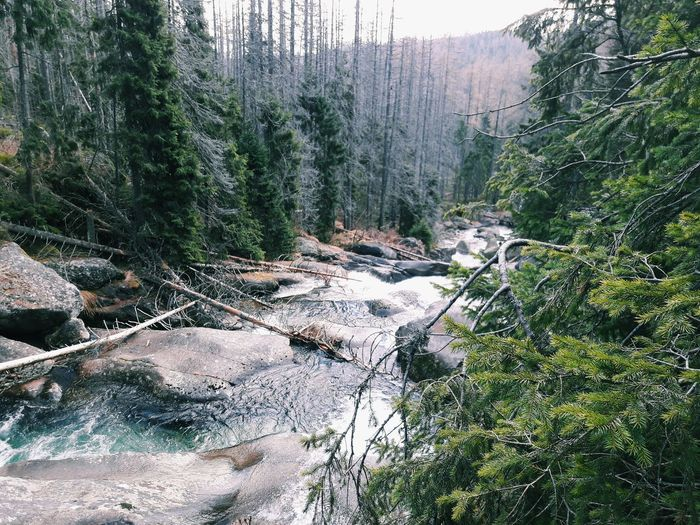 Tree Nature Forest Day Beauty In Nature No People Outdoors Nature Mountains Water Waterfall Green Blue