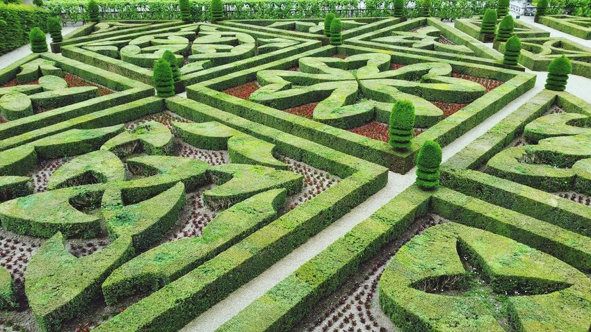 Full Frame Backgrounds Green Color No People Day Leaf Nature Outdoors Close-up Green Color Pattern Villandry Castle Chateau De Villandry Villandry Chateau Villandry Villandry Gardens Vacations Travel Destinations Grass High Angle View Freshness Beauty In Nature Field Growth Nature