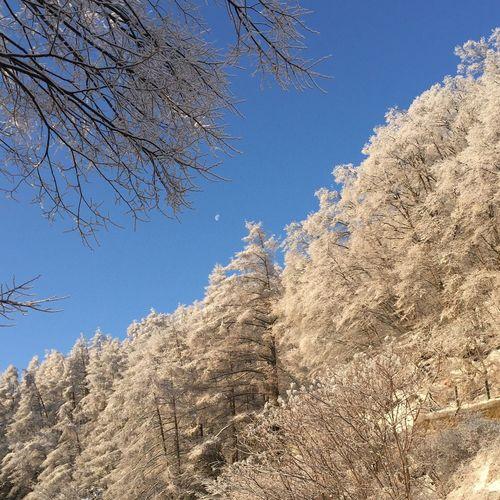 雨氷の木々… EyeEm Nature Lover Nature Tree 木 冬の景色 八ヶ岳山麓 空 今日の空 青空 My Sky Nagano, Japan 信州 冬空 雨氷 月 Moon