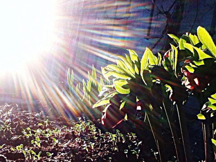 Sunlight streaming through plants