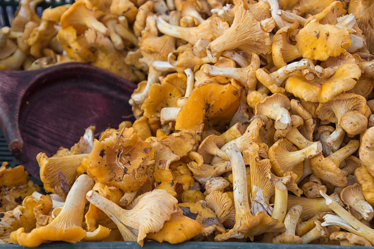Chanterelles on