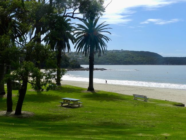 🌴 Life Is Better At The Beach Balmoral Beach Pacific Ocean Tree Palm Tree Water Scenics Tranquility Beauty In Nature Day Sea Grass Outdoors EyeEmNewHere