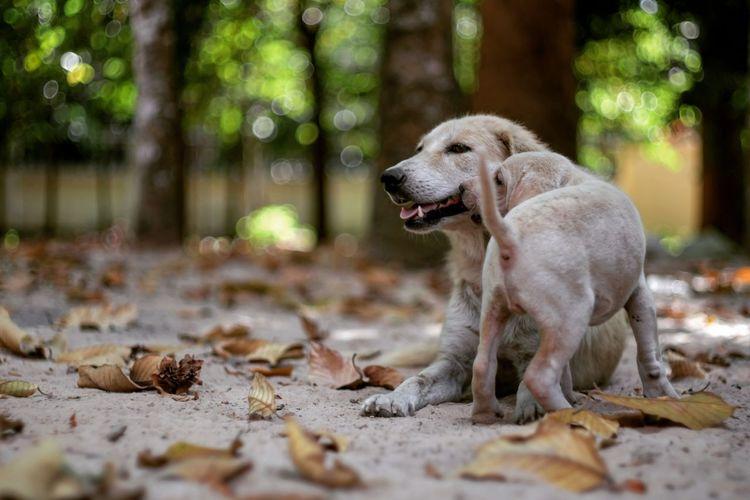 Playful Dogs On Field