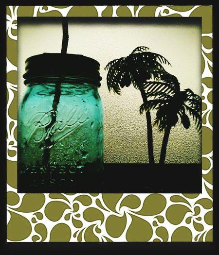 Indoors  Water Mesonjar Plants 🌱 Sunset