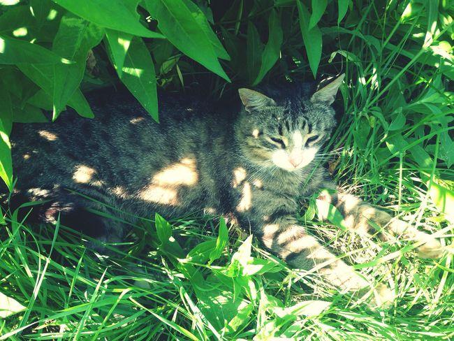 Котейка мой :** Save Animals I Love My Cat So Funny Russia