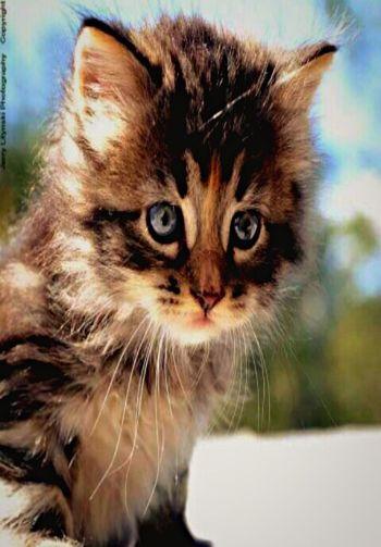 I Love My Cat ❤ Hello World Catsofinstagram Beautiful Cat Lovers