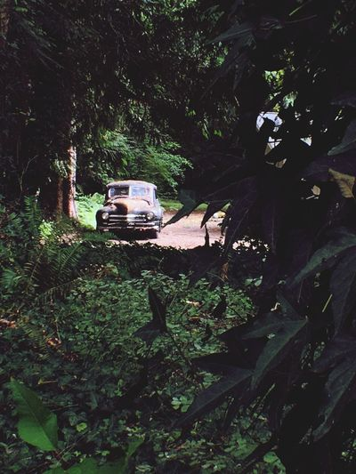 Old Cars Rusting Car