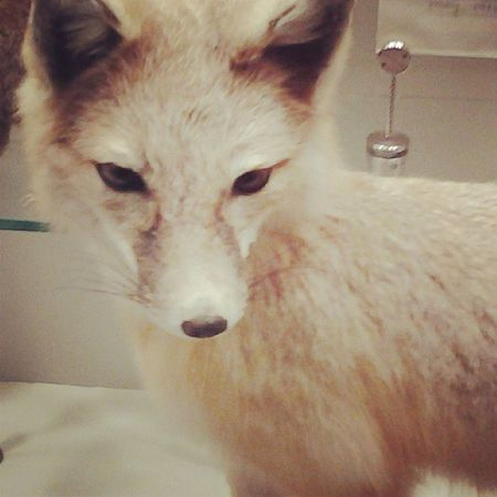 Cute What Does The fox say