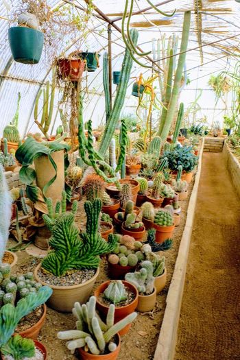Cactarium Cacti Cactus Garden Growth Plant Cactus Nature Day Outdoors California Dreamin No People Beauty In Nature Greenhouse