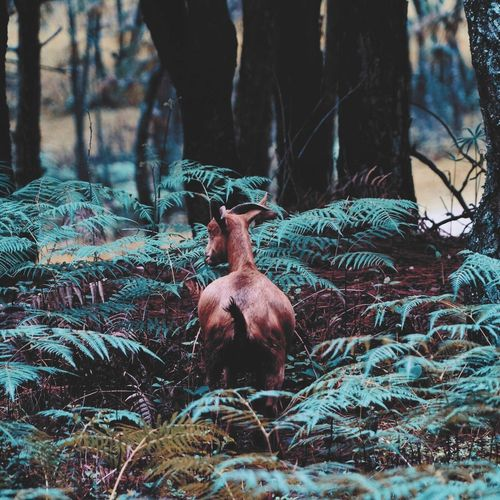 Goat standing amidst plants at forest