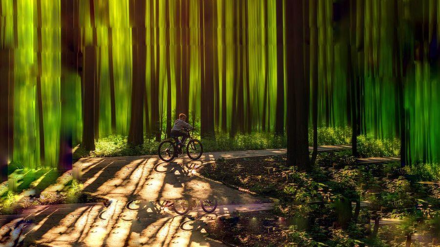 Boy riding bike in forest