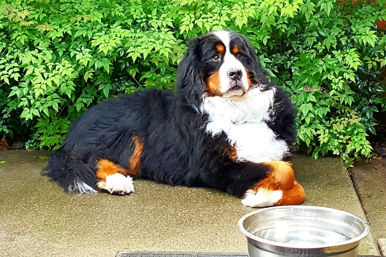 domestic animals, pets, dog, mammal, animal themes, one animal, outdoors, no people, day, sitting, nature, close-up