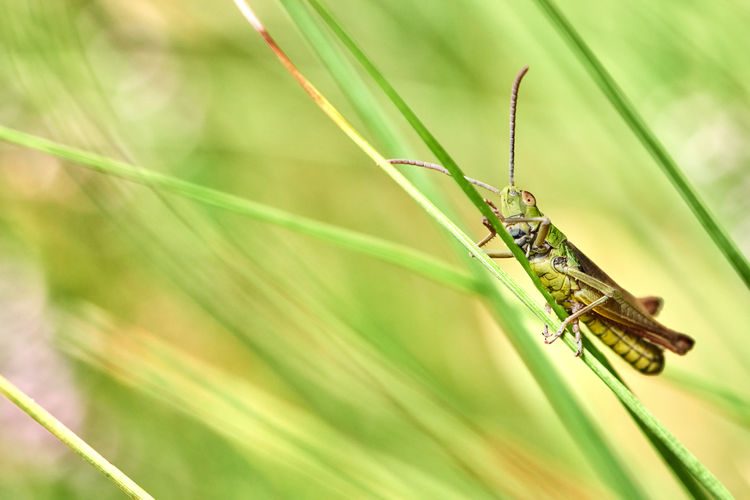 Close-up of insect on blade of grass