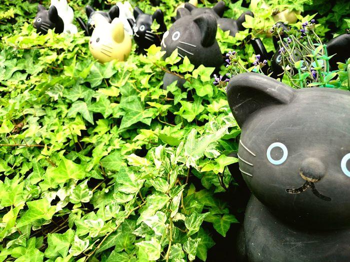 招き猫の発祥の地