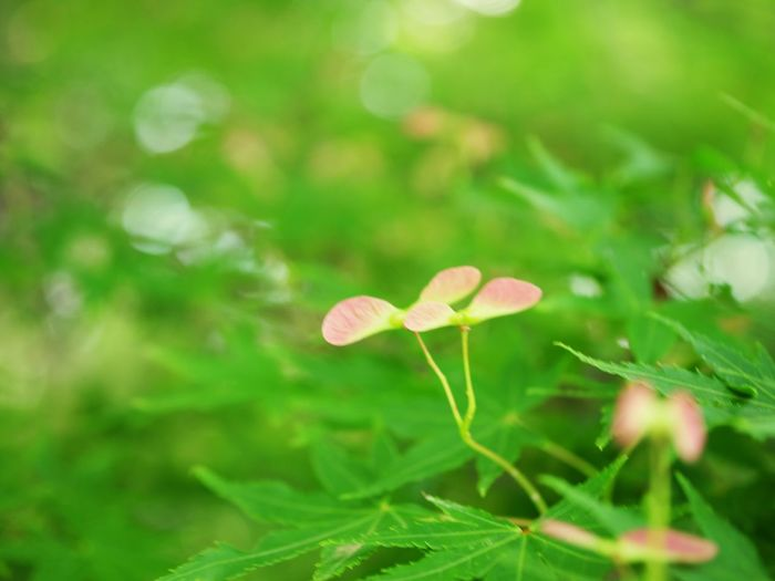 Flower Head Flower Leaf Mushroom Fungus Uncultivated Close-up Grass Plant Green Color