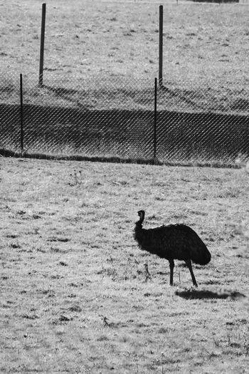 """""""Stark Stork"""""""