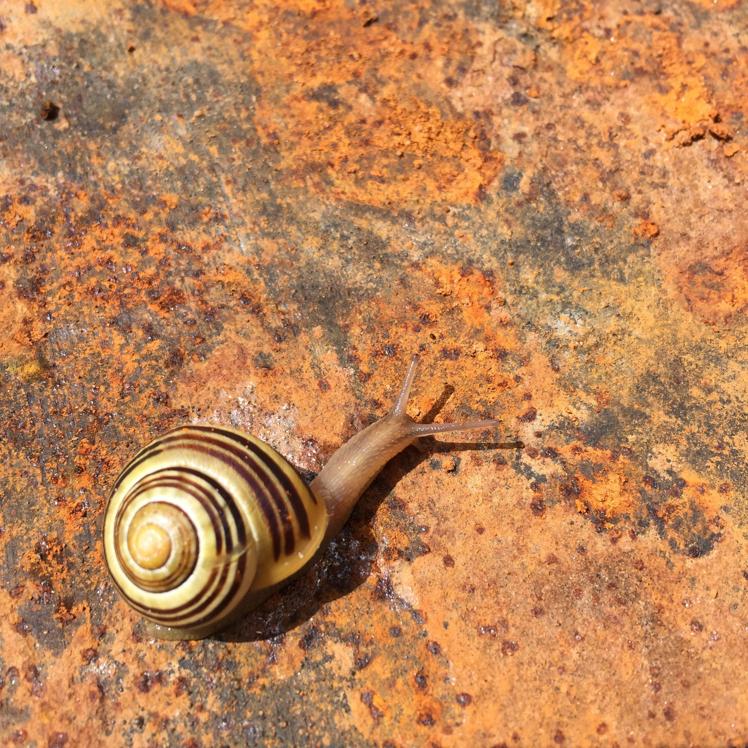 animal shell, snail, close-up, shell, outdoors, day, nature, no people, ground, natural pattern, spiral, focus on foreground, selective focus, detail
