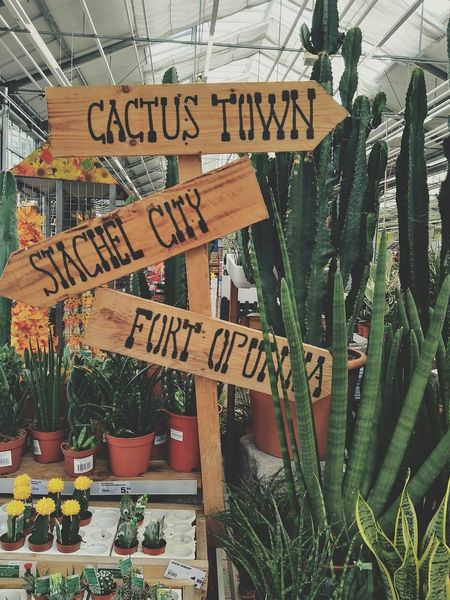 Cactus Cactus Town Western Script Message Close-up Outdoors Day Cactus Tree Nature Shop Green Color Green Frankfurt Am Main Germany No People EyeEmNewHere