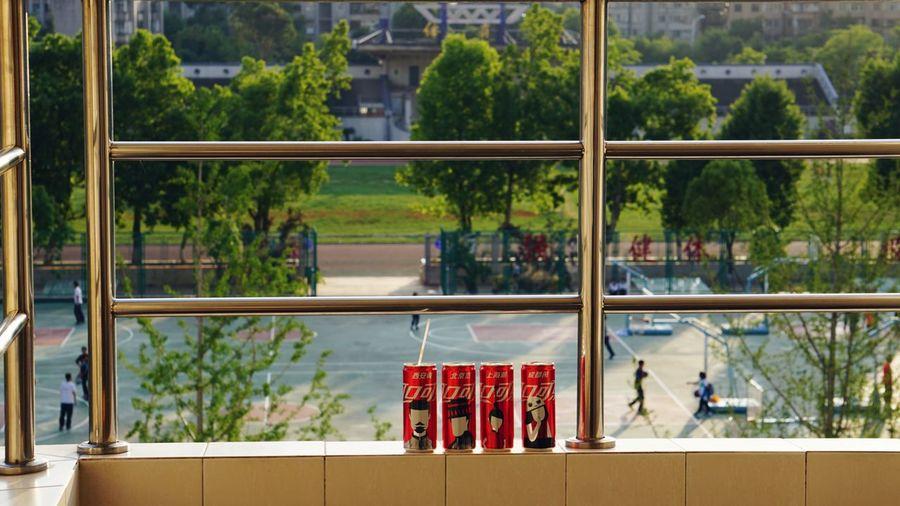 可乐、篮球、青春 Plant Tree Nature Day Window Architecture Glass - Material