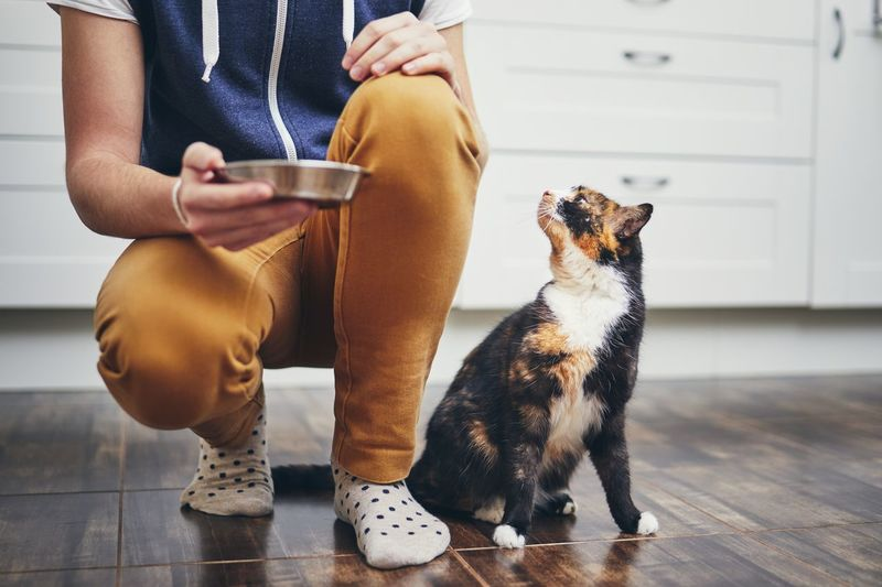Domestic life with pet. Man holding bowl with feeding for his hungry cat. Men Home Kitchen Cat Domestic Life Pets Domestic Animals Joy Friendship Love Hungry Feeding  Eating Bowl Holding Sitting One Person Real People One Animal Lifestyles Pet Owner Desire Togetherness Cute Care
