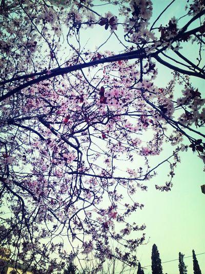 Smells Spring , I like it <3