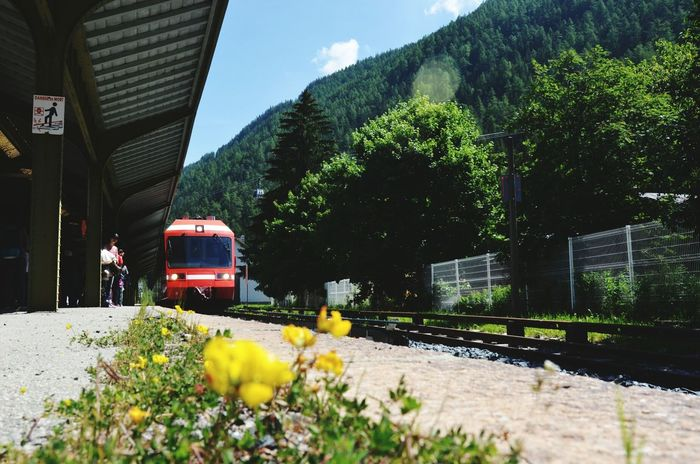 The Great Outdoors - 2015 EyeEm Awards RePicture Travel Train Train Station Railway Switzerland Swiss Yellow Flower Red Train Starting A Trip