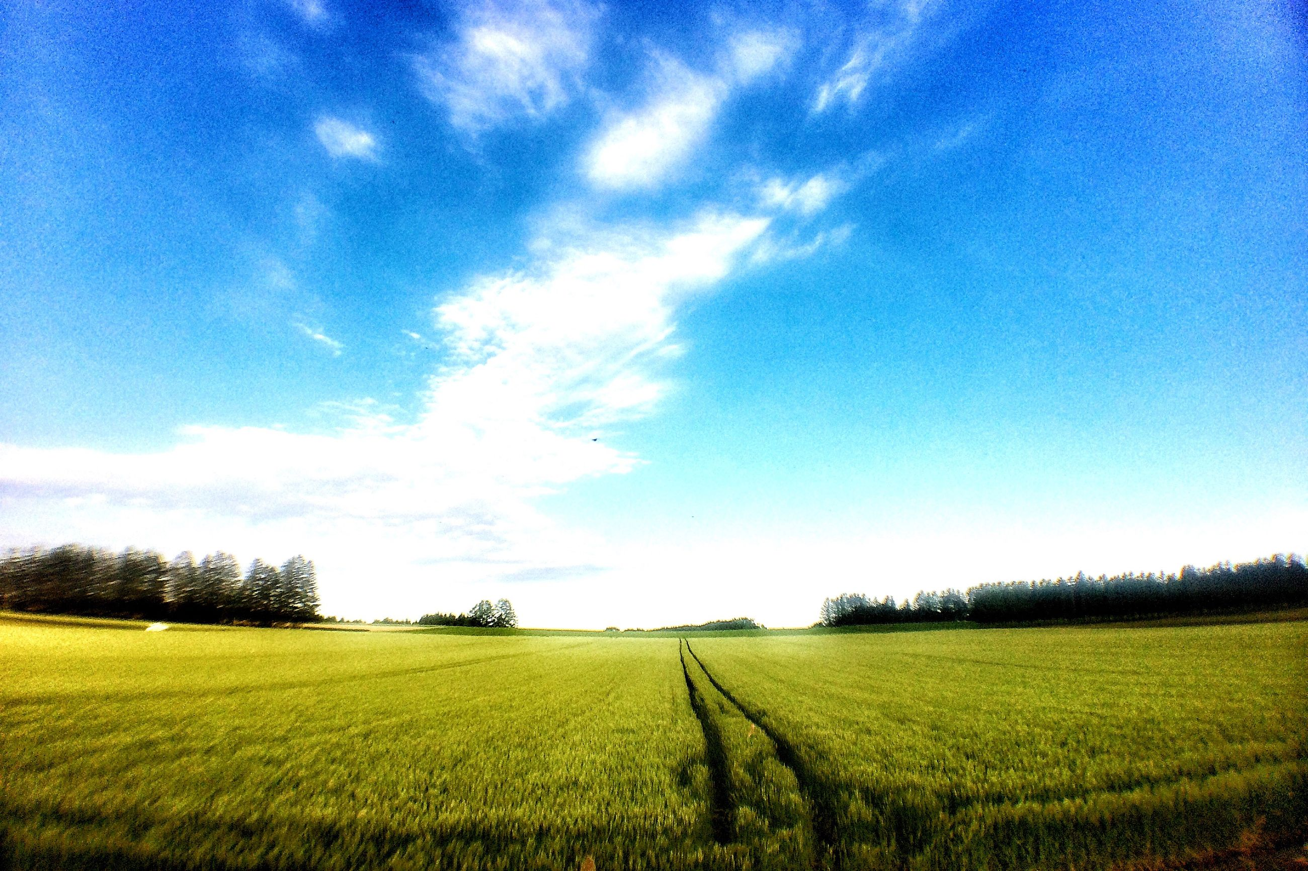 field, agriculture, rural scene, landscape, tranquil scene, tranquility, beauty in nature, growth, sky, scenics, farm, nature, crop, blue, yellow, grass, cultivated land, tree, green color, idyllic