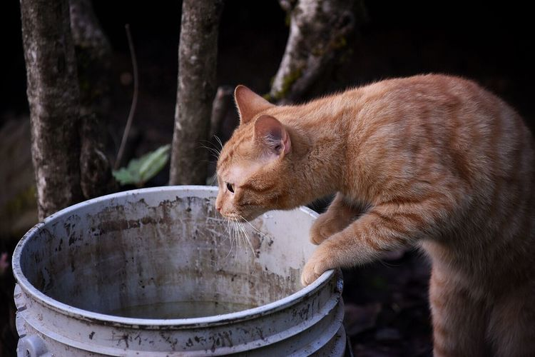 Close-Up Of Cat Rearing Up On Bucket In Yard