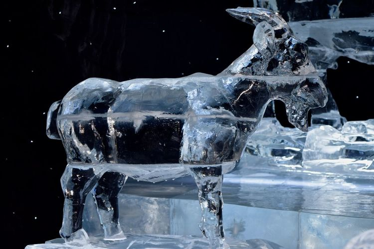 On this hot Florida Day, I am having fond memories of ICE last November... Oh, I wish I could find someplace and enjoy the cold right now... Faylord Palms Florida Life Ice ICE At The Gaylord Palms Ice Sculpture Ice Sculptures November 2015 Orlando Florida