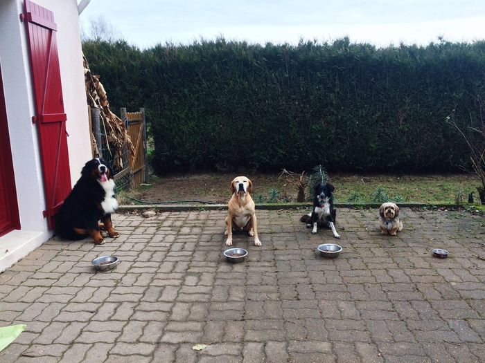 Dogs Animal Themes Enjoying Life The Time To Eat Pets Outdoors Enjoy Love Playing With Passion